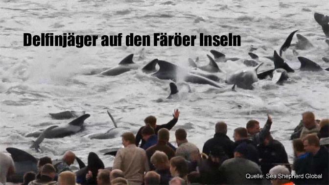 Delfinjäger auf den Färöer Inseln